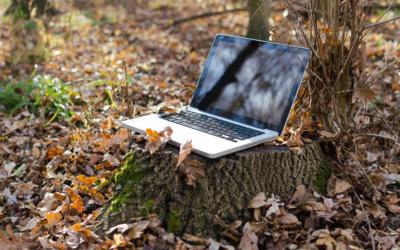 5 astuces pour une veille adaptée au secteur forêt-bois